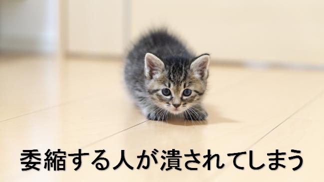 委縮する猫のイメージ画像